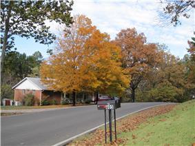 Josephine Street in the fall