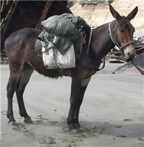 a dark brown mule with a pack on its back