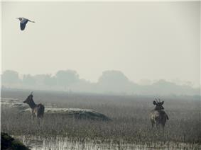 Grassland under water with deer and a flying heron.
