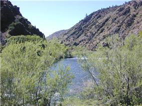 Light-green desert bushes in front of the river and its canyon