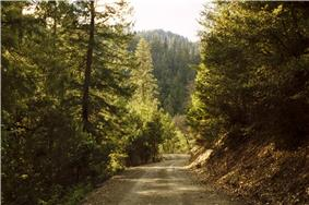 A road through the forest.