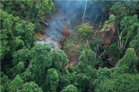 An aerial view of a forest with a patch of trees cut down and smoke rising