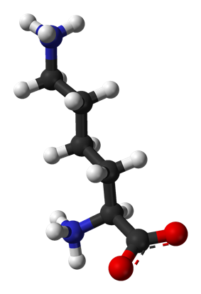 Ball-and-stick model of lysine at physiological pH (zwitterionic form)