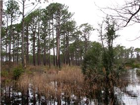 Swamp along the Patsy Pond Nature Trail.