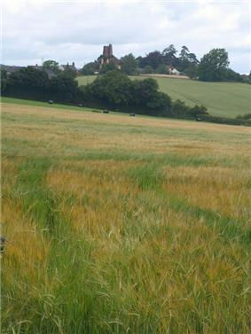 Church tower seen across fields