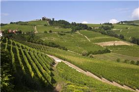 Hilly area with vineyards.