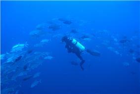 Layang-Layang diving.jpg