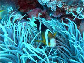 Layang-Layang diving4.jpg