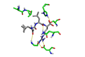 Crystal structure of Leupeptin (silver) in the Trypsin (green) binding pocket.