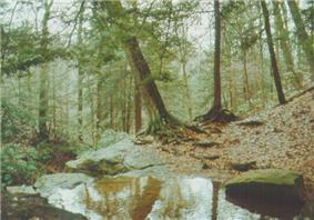 A small body of water surrounded by large rocks, evergreen trees and leaf covered ground
