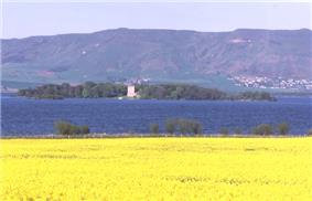 A field of yellow flowers in the foreground, with a dark blue lake beyond. A wooded island in the lake has a white structure of two storeys at centre and there are green and brown hills beyond. There is a small cluster of houses on the distant hill slope at right.