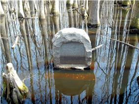 Monument flooded swamp water surrounded by large, kneed cypress trees