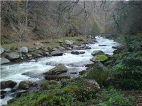 A white stream flowing between rock banks through woodland