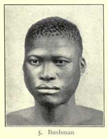 San man, Bushman type