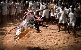 image of a bull fight
