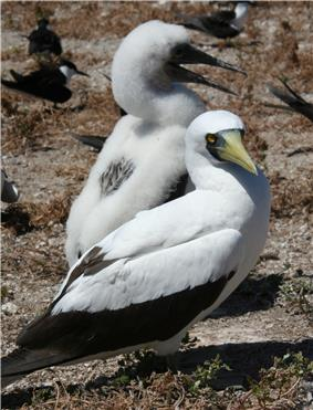 Photograph of two white and black birds on rocks