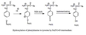 Hydroxylation of phenylalanine to tyrosine.
