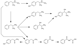 Graphic of several routes of methamphetamine metabolism