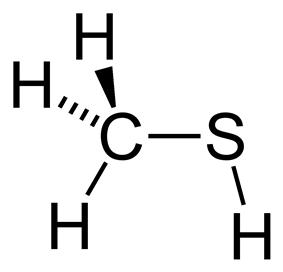 Methanethiol