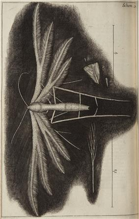 Micrographia Schem 30.jpg