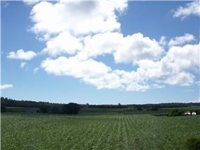 Minamidaitō landscape