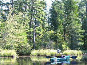Kayaking on the Mullica River, pine trees in background