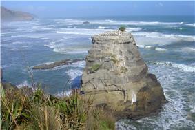 Wild coast and gannet colony - Motutara Island