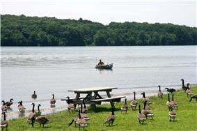 A lake with a canoe and forested far shore, a flock of Canadian geese and picnic table are on the grassy near shore