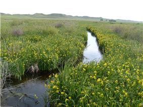 A small river flows through a field of grass and yellow flowers.