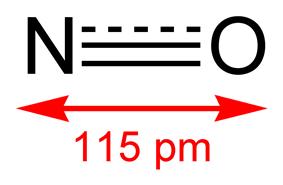Skeletal formula of nitric oxide with bond length