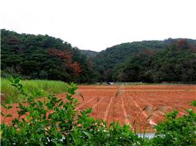 OkinawaOnna3.jpg