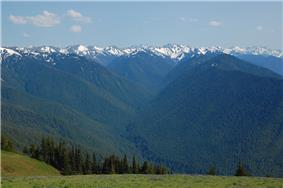 Forests and the Olympic Mountains from Hurricane Ridge.