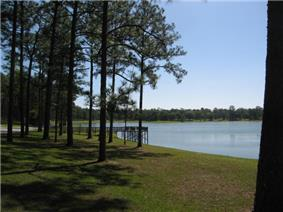 Open Pond and pine trees.