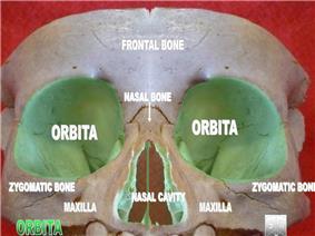 Orbita2.jpg