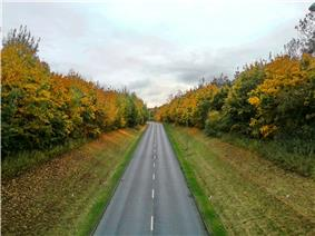 Ortwell Road toward Mount Road, Bury St Edmunds, 25 Oct, 2012.jpg
