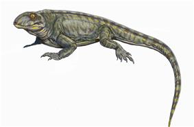 Palaeohatteria longicaudata