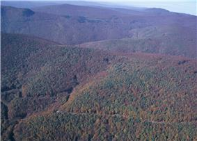 View from the air of a forest-covered mountain