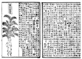 Two pages of a book printed on pieces of paper. On the left, half of the page is occupied by a line drawing of a plant. On the other half, as well as the whole of the right page, is vertically aligned text.