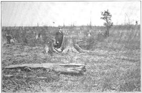 Black and white image of a man standing in a wasteland of massive tree stumps that stretch to the horizon. A few small trees are still standing.