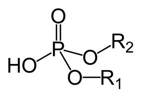 Phosphodiester