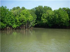 Pichavaram Mangrove.jpg