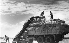 Men loading hay bales onto truck at a Kibbutz.