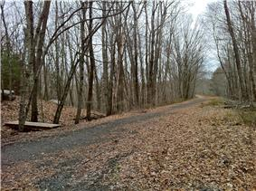 A trail intersection with bare trees and dead leaves.