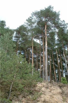 Tuchola Forest