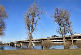 A box girder freeway bridge on thin pillars.