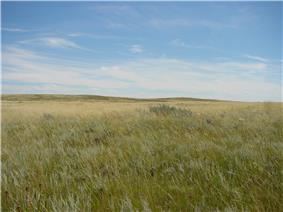 Low hills covered in shortgrass prairie
