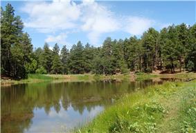 A lake near Mingus Mountain.