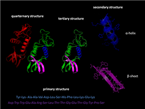 )Protein structure