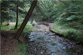A rock-filled narrow stream flows through a forest