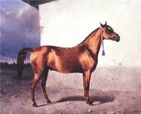 Karabakh stallion